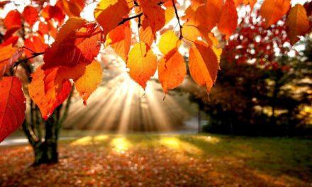 La détox d'automne