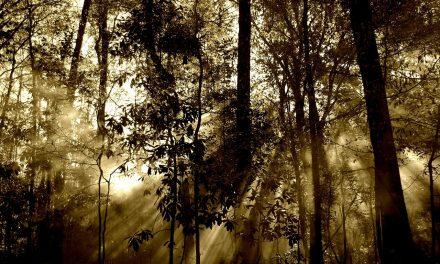 Journée mondiale de l'environnement : hommage à la nature et à la forêt