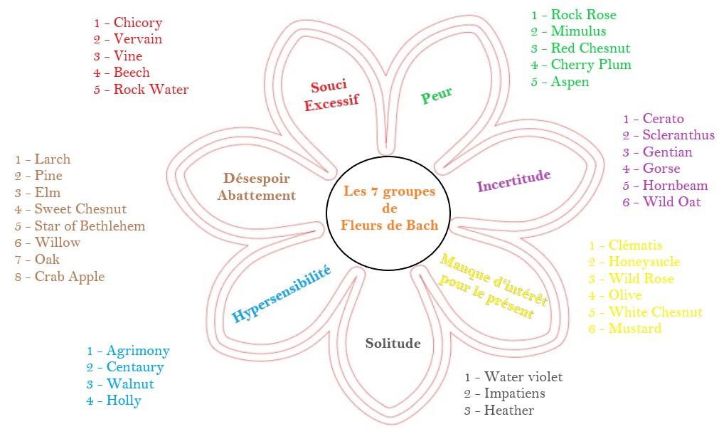 fleurs-de-bach-7-groupes-d-emotions-des-38-elixirs-floraux
