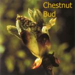 fleurs-de-bach-chesnut-bud