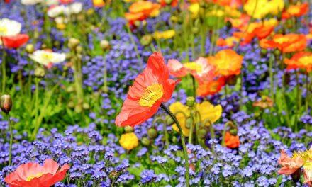 Fleurs de Bach, les 38 elixirs floraux classés en 7 groupes d'émotions (1/2)