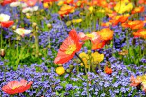 fleurs-de-bach-les-38-elixirs-floraux-classes-en-7-groupes-d-emotions-2-2-1024x682