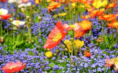 Fleurs de Bach, les 38 elixirs floraux classés en 7 groupes d'émotions (2/2)