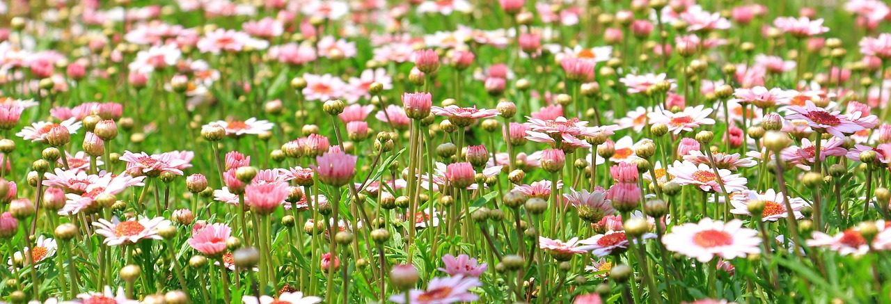 Booster sa vitalité avec les Fleurs de Bach